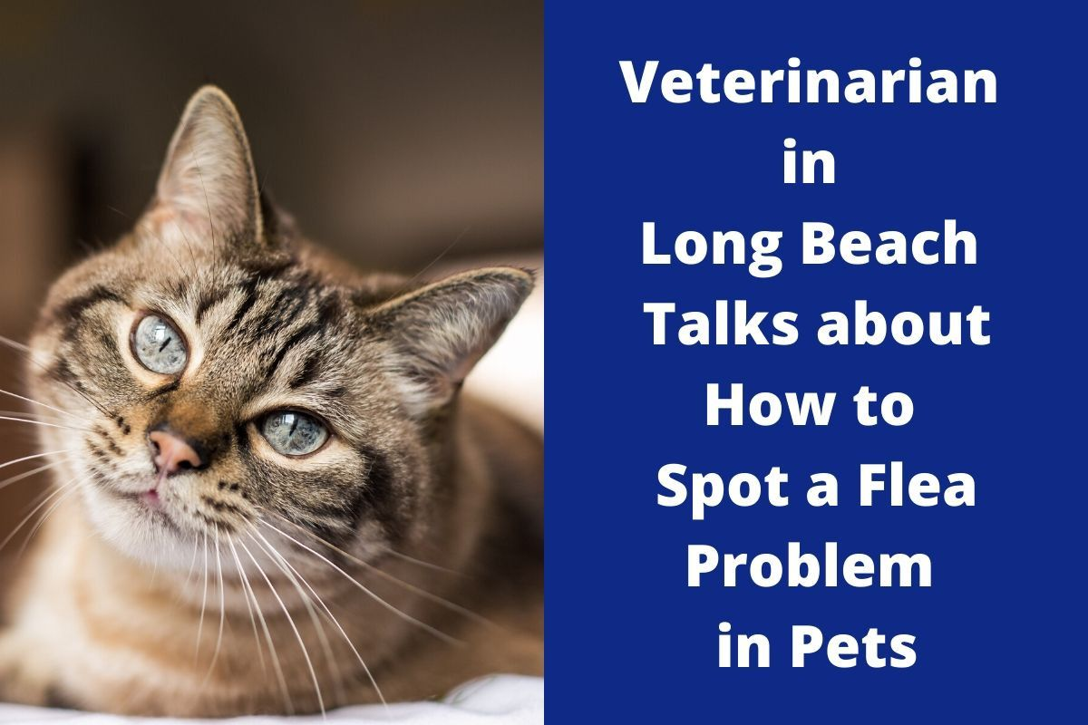 Veterinarian in Long Beach Talks about How to Spot a Flea Problem in Pets