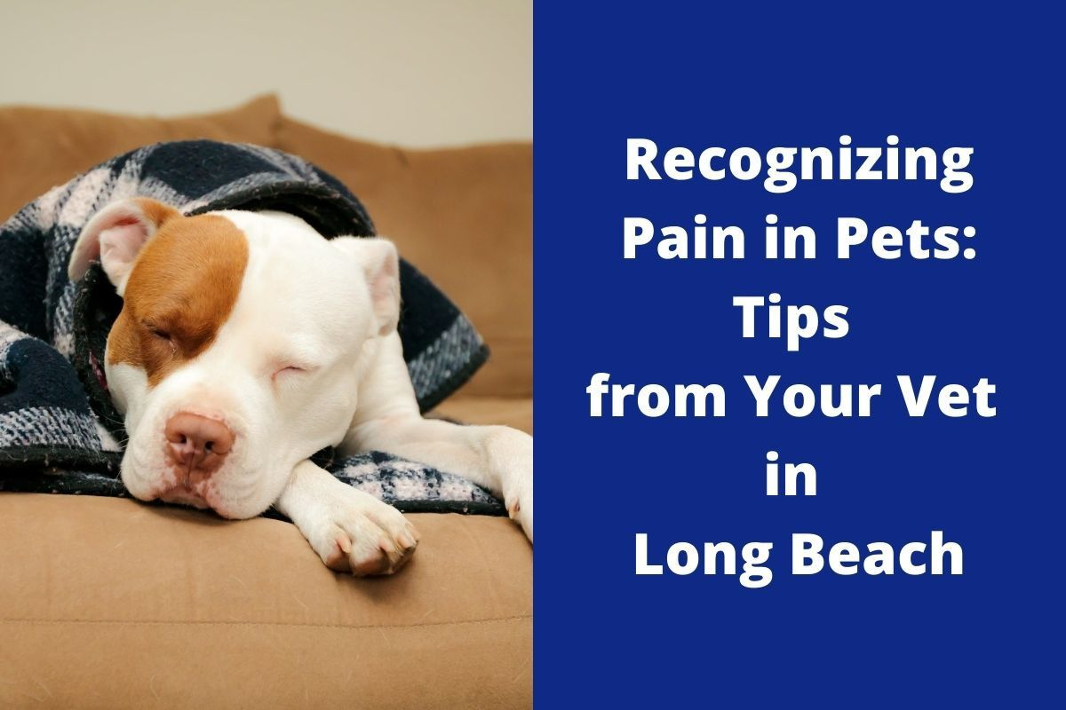 Recognizing Pain in Pets: Tips from Your Vet in Long Beach